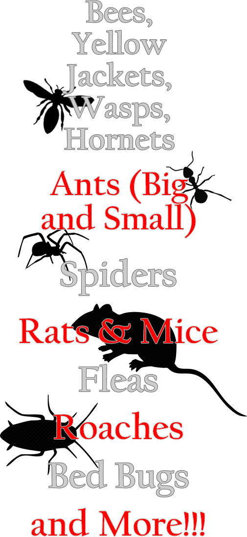Bees, Yellow Jackets, Wasps, Hornets, Ants, Spiders, Rats, Mics, Fleas, Roaches, Bed Bugs